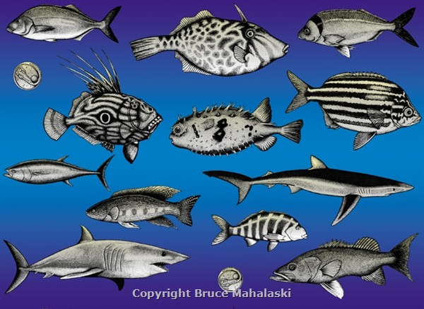 NZ Fish Wrapping Paper