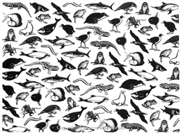 35 -NZ animals design for wrapping paper