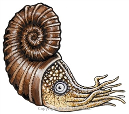 057 - Ammonite Picture - Extinct.